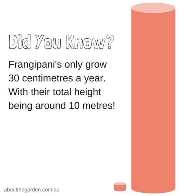Did you know frangipanis only grow 30cm a yea