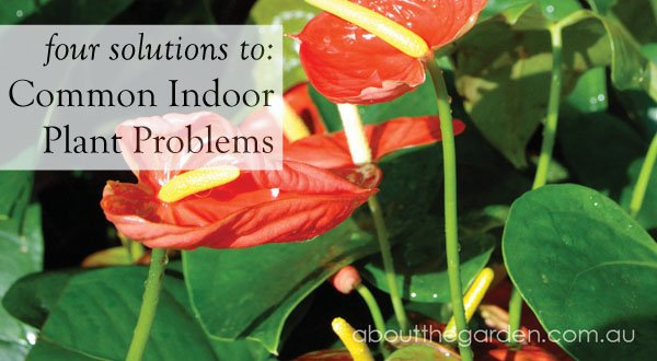 solutions for common indoor plant problemsabout the garden, Natural flower