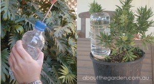 2 great ideas for watering your pot plants when you go on holidays on self watering plants on vacation, water while on vacation, watering plants while on vacation, watering house plants on vacation, watering spikes for plastic bottles,