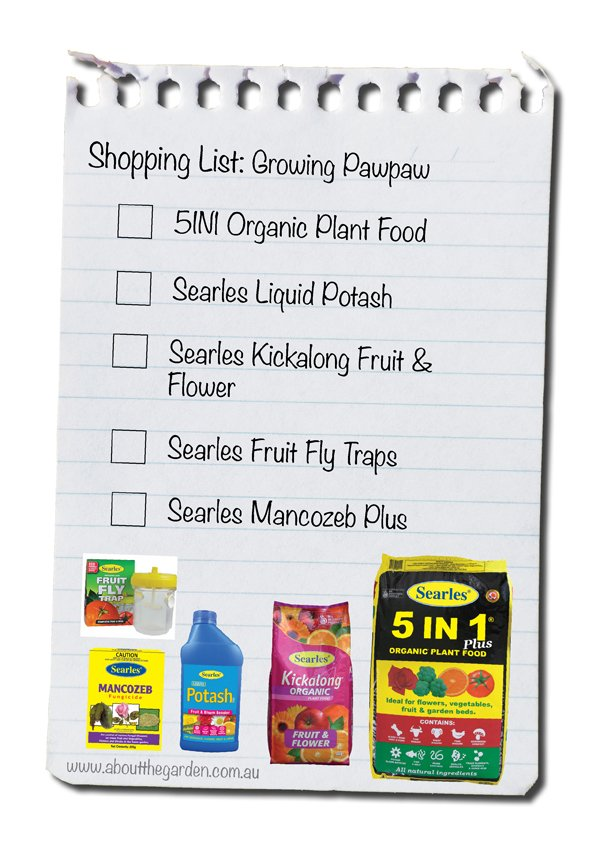 growing pawpaw shopping list australia