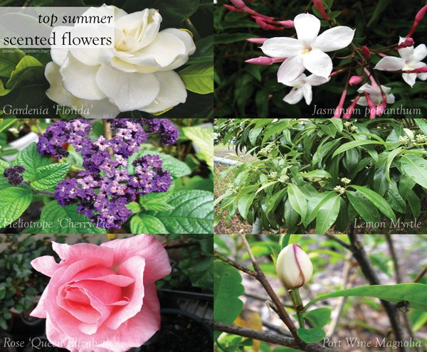 Top 10 Summer Scented Flowers