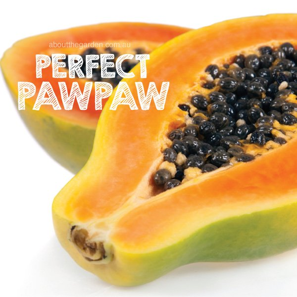 How to Grow Pawpaw | About the Garden Magazine