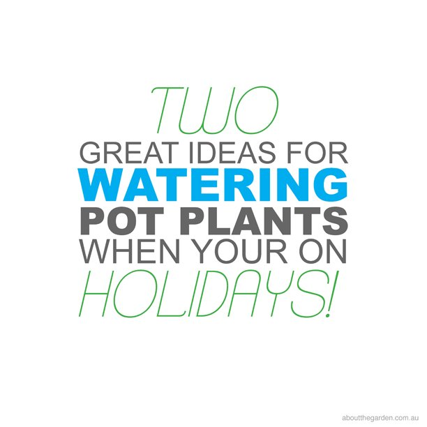 two great tips for watering pot plants whilst your on holidays
