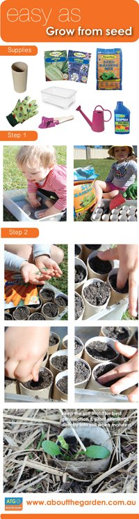 Recycle & reuse your toilet rolls to germinate seeds!