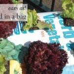 Easy as! Grow salad in a potting mix bag