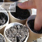 Easy as! Grow from Seed