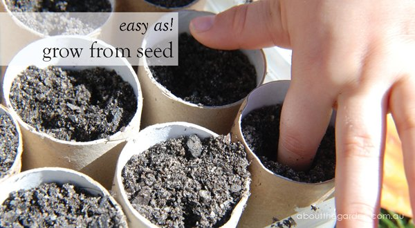 Recycle old toilet rolls to germinate seeds!