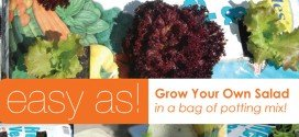 How to grow vegetables in a bag of potting mix
