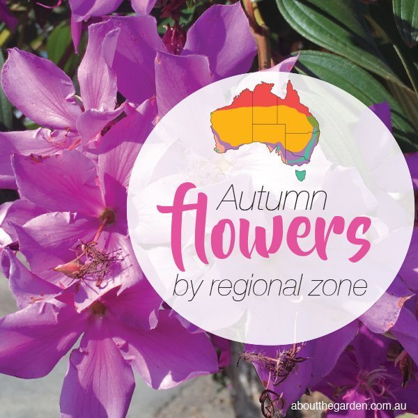 Autumn Flowers Planting Guide By Regional Zones About The Garden