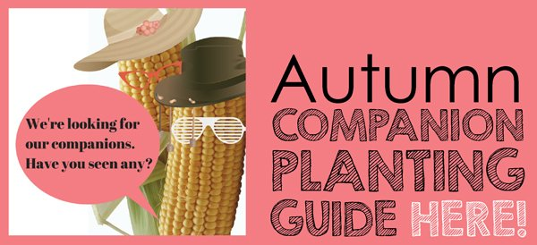 Autumn companion planting guide here aboutthegarden