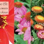 Five (5) daily like flowers for autumn colour ALL #aboutthegarden