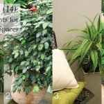 Fourteen (14) foliage plants for indoor spaces #aboutthegarden