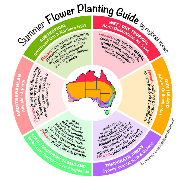 Garden Ideas Victoria Australia planting flowers summer seasonal growing guide australia | about