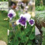Three (3)Lawn alternatives for yards #aboutthegarden