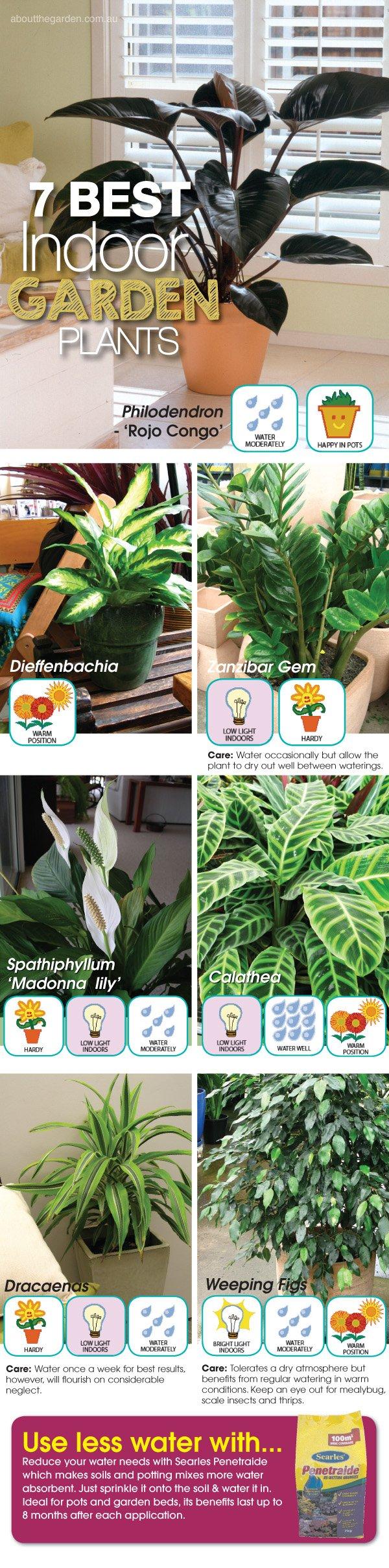 7 best Indoor Garden Plants #indoorgardens #aboutthegardenmagazi