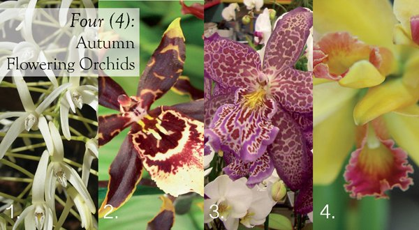 Autumn Orchids