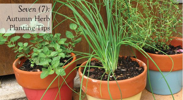 How to Grow Culinary Asian Herbs Sage Thyme Lavender