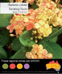 Australian Temperate Zones Pink Orange Yellow