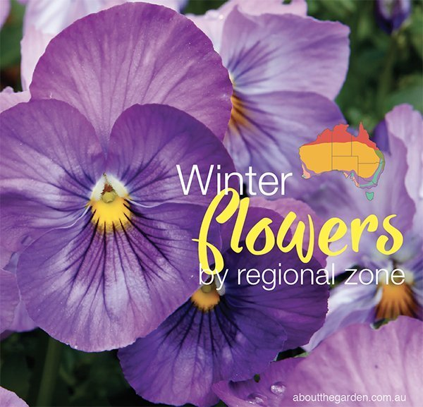 Winter Flowers Planting Guide By Regional Zones About The Garden