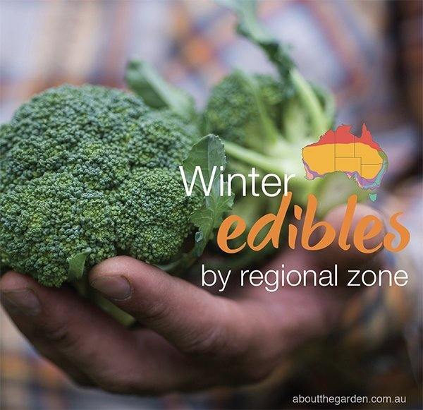 Fall Vegetable Gardening 5 Things To Plant Now: Winter Herb, Fruit & Vegies Planting Guide By Regional