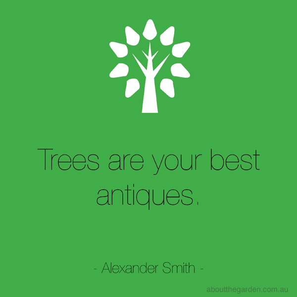 Garden Quote Qoute and saying-Trees-are-your-best-antiques