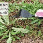 tips for hand weeding without chemicals #aboutthegarden