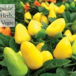 Australia Spring herb, fruit and vegetable growing guide by regional zones #aboutthegarden