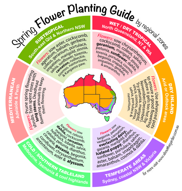 Spring flowers planting guide by temperate regional zones what to download mightylinksfo