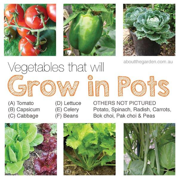 How to Grow Organic Vegetables in Pots Australia Vegetable