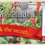 Cymbidium & Bromeliad Speciality Mix Searles Healthy Plants