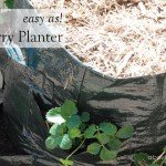 Easy As planting up a strawberry planter #instructions #aboutthegarden
