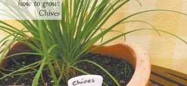 How to Grow Cheerful Chives