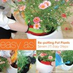 step by step guide on how to re pot flowers and pot plants