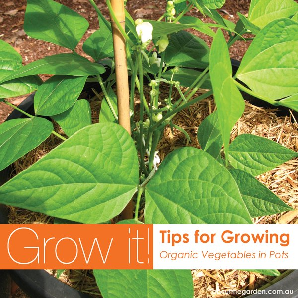 Tips for growing australia vegetable garden in pots