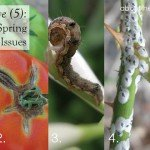Five (5) common plant health spring issues #pests #deseases #gardening #searlesgardeproducts #aboutthegarden