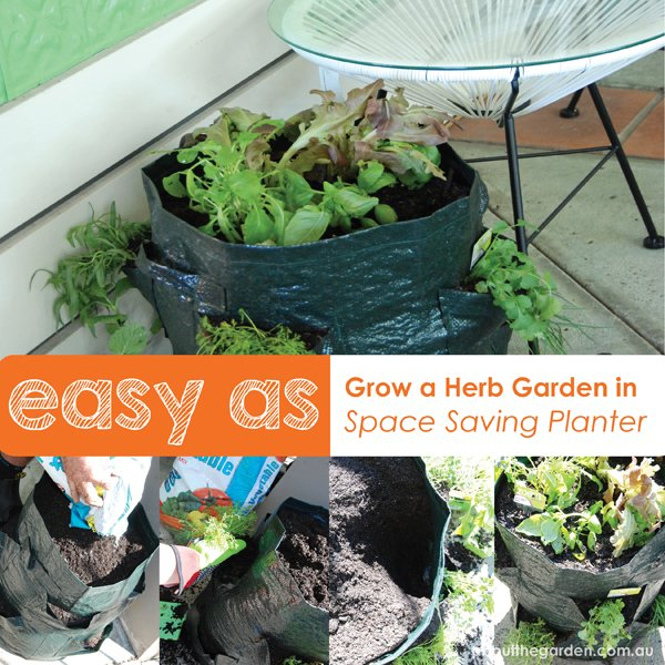 Grow herbs in a space saving planter great for small spaces