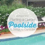 Building a garden poolside 6 things to consider