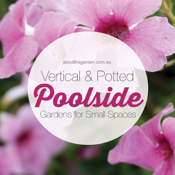Vertical and potted poolside gardens for small spaces