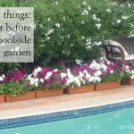 6 Things to Consider Before Planting a Poolside Garden