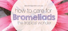 How to care for bromeliads the tropical wonder