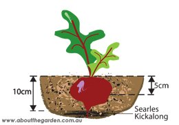 Dig Searles Kickalong into the soil approximately 10cm deep 2 weeks before planting for best results.