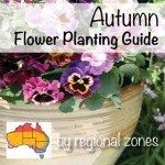 Autumn Flower Planting Gu