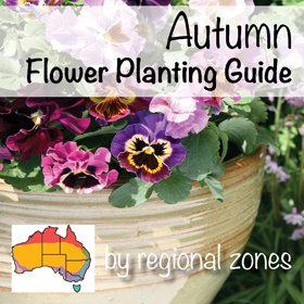 Summer, autumn, winter, spring: what veggies to plant and ...