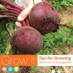 Growing beetroot in Australia vegetable garden #aboutthegarden