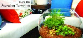 Easy As! Create a Succulent Terrarium