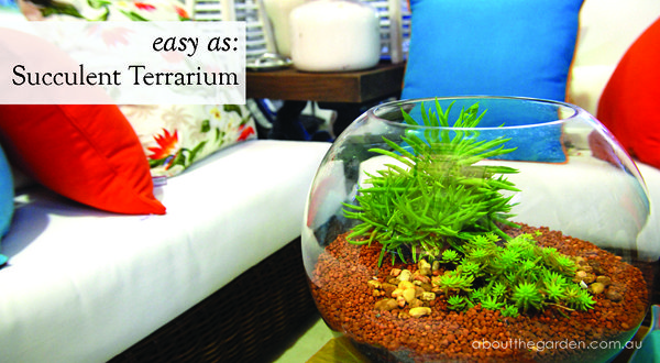 How to plant succulents in a terrarium www.aboutthegarden.com.au