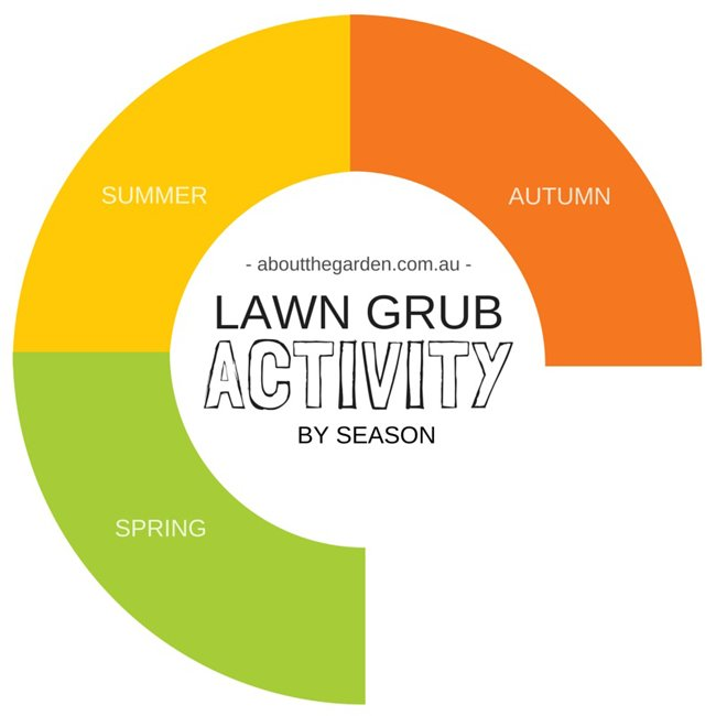 Infogram Seasons you can expect Lawn Grub Activity