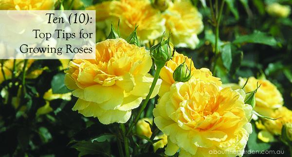 Roses In Garden: Small Garden Spaces