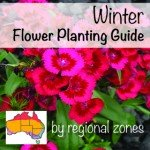 winter flower planting guide by temperate zone australia