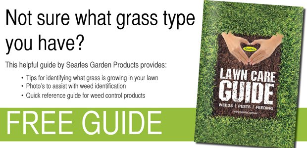 how to identify your grass type in the lawn searles garden products